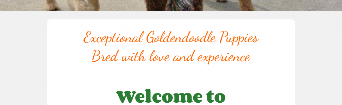 Goldendoodle Website Scammed by http://Goldendoodlehome.com